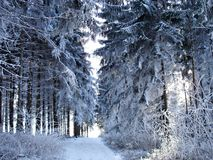 14 erzgebirge冬天 图库摄影