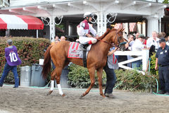 Free 143rd Running Of The Travers Stakes Stock Image - 26342891