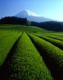 146 fujisan Стоковое Изображение