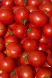 1490 ντομάτες Στοκ Φωτογραφία