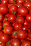 1490 tomater Arkivbild