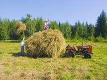 15割晒牧草西伯利亚 免版税库存照片
