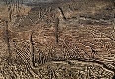 15干燥纹理结构树 免版税库存照片