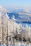 15森林没有多雪 库存图片