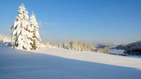 15森林没有多雪 免版税库存图片