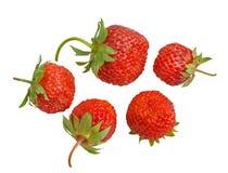 15浆果草莓 免版税库存照片