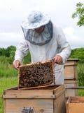 15蜂农 库存图片