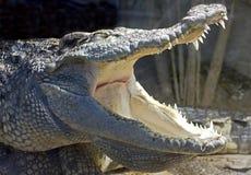 15鳄鱼泰国 库存照片