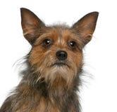 15 στενά μικτά σκυλί μηνών διασταύρωσης επάνω Στοκ εικόνα με δικαίωμα ελεύθερης χρήσης