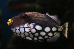 15 рыб тропических Стоковое Изображение