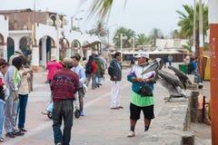 КАРАКАС, ПЕРУ - 15-ОЕ АПРЕЛЯ 2013: Пеликан ждет еду Подготавливайте для представления в Каракасе, Перу Стоковая Фотография