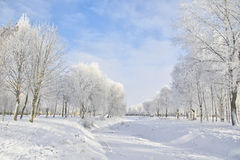 -15 C. Cold winter in the park Stock Photography