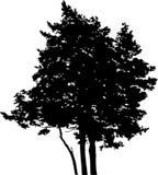 15 isolerad silhouettetree Royaltyfria Foton