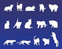 15 kattvektorer stock illustrationer