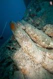 15 '' Shells auf den SS Thistlegorm. Stockfotos