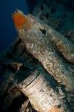15 shells '' op SS Thistlegorm. Royalty-vrije Stock Foto