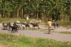 15 tanzania Royaltyfri Fotografi
