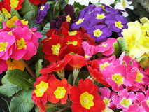 1521flowers Royalty Free Stock Image