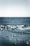 155 Αντίμπες Στοκ φωτογραφίες με δικαίωμα ελεύθερης χρήσης