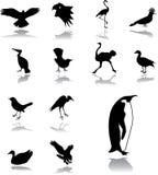 155 установленных икон птиц Стоковые Изображения RF