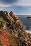 1592年海岸线灰狼mg点 免版税库存图片