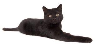 15mm svart katt som lägger ner Royaltyfri Fotografi