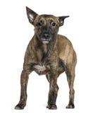 16个品种狗混杂月突出 库存图片
