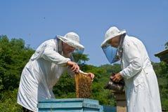 16位蜂农 库存照片
