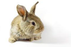 16兔子 库存图片