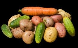 16棵蔬菜 库存图片