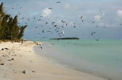 16海岛rodrigues 库存照片