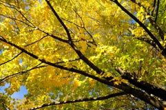 16片秋天叶子没有 库存图片