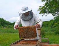 16蜂农 库存照片