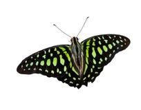 16蝴蝶 库存照片