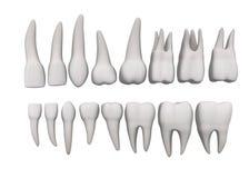 16颗集合牙 向量例证