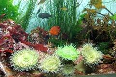 16 akvarium monterey Arkivbilder