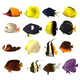 16 fishes collection. 3d render of tropical fishes - 16 Vector Illustration