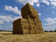 160 agrar Zdjęcie Royalty Free