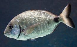 17条水族馆鱼 库存图片