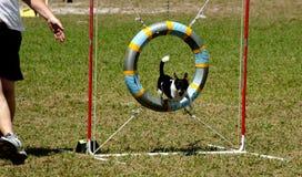 17条狗 库存图片