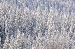 17森林没有多雪 免版税库存图片