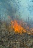 17火森林 免版税图库摄影
