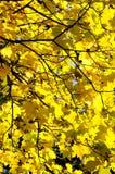 17片秋天叶子没有 免版税库存图片