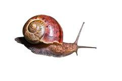 17蜗牛 免版税库存照片