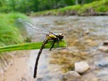 17蜻蜓 免版税库存照片
