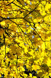 17 φθινόπωρα αφήνουν το αριθ Στοκ εικόνα με δικαίωμα ελεύθερης χρήσης