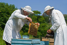 17 beekeepers Arkivfoton