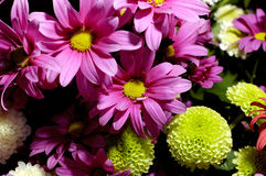 17 blommor Fotografering för Bildbyråer