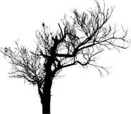 17 isolerad silhouettetree Royaltyfri Fotografi