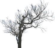 17 isolerad treevektor Fotografering för Bildbyråer